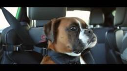 Boxer Brody – nejlepší spolujezdec Vaughna Gittina Jr – Ford Fiesta ST