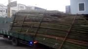 Jak se skládá náklad dřeva z korby náklaďáku na Taiwanu