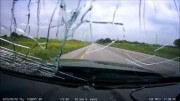 Když se pták rozhodne přejít dálnici – krocan sebevrah
