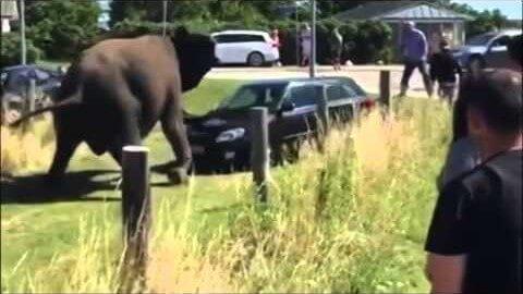 Rozzuřený slon si zchladil žáhu na Fabii Kombi
