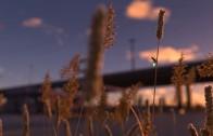 Světlušky vyrábějí elektřinu pro pro elektromobily? Romantická lež jako věž